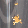 Detail Glasgravur Frosch